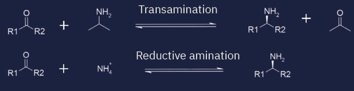 chemical-reaction-Transaminases-Anime-Dehydrogenases