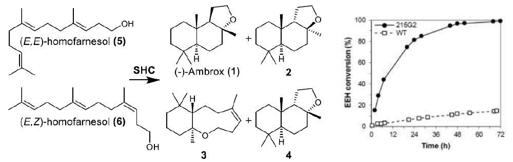 ambrox-scheme